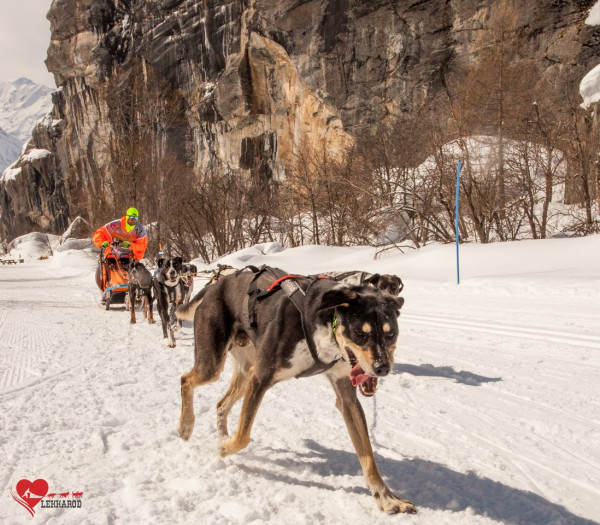 race musher