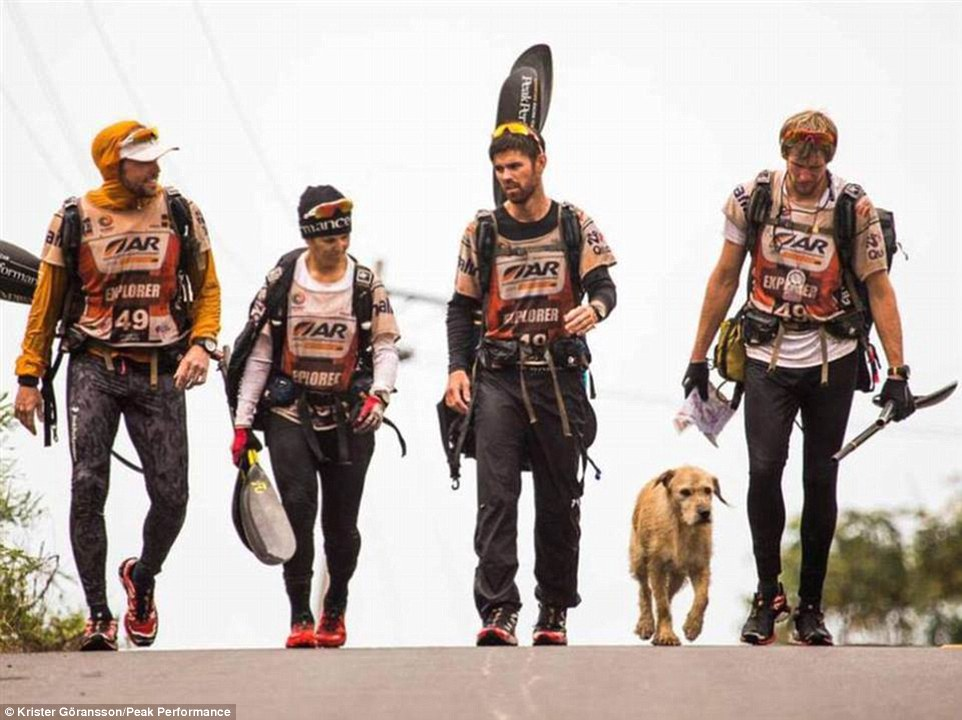 The fifth member Team Peak Performance walk with stray dog Arthur during a stage of the 430-mile Adventure Racing World Championship. He followed the group of four during the grueling race