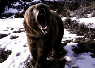 grizzlyduhos