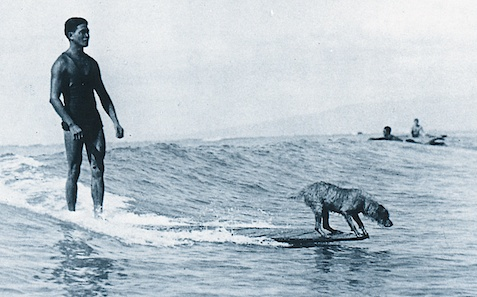 surfer_dog