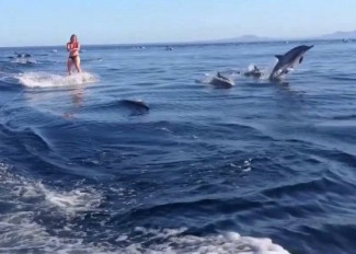 wakeboard_dolphin